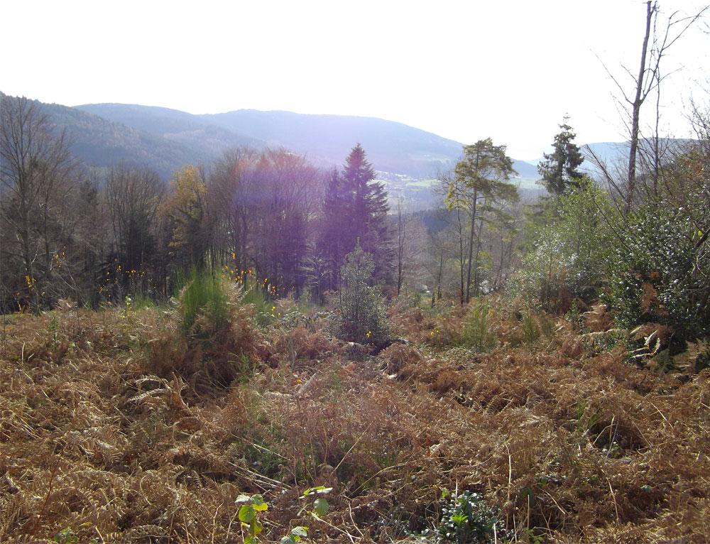 88530 le tholy terrains b tir terrain for Terrain a batir